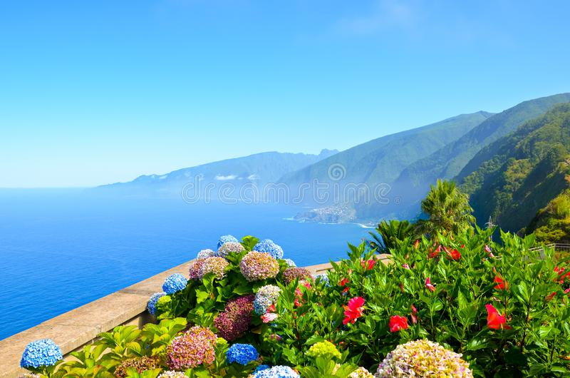 Colorful flowers and beautiful northern coast of Madeira Island, Portugal. Typical Hydrangea, Hortensia flowers. Amazing coast by stock photography