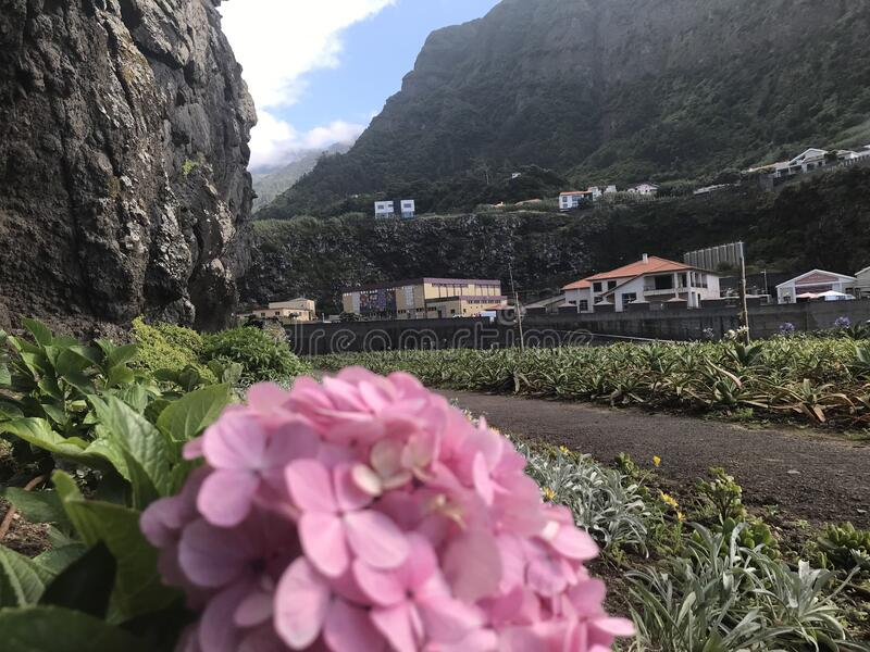 Flowers and mountains of Madeira island stock images